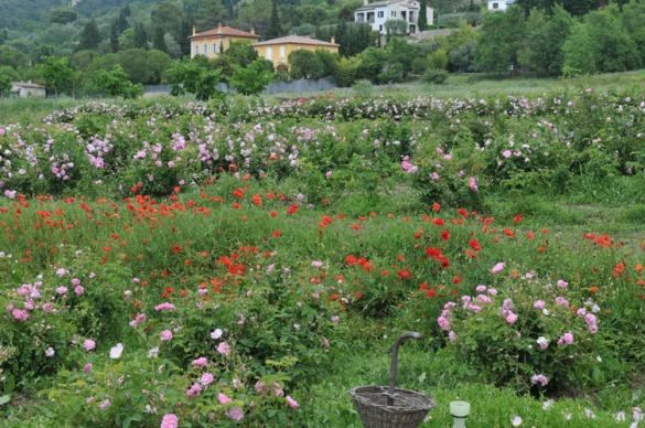 Jardins de MIP, Mouans Sartoux (image copyright Musées de Grasse)